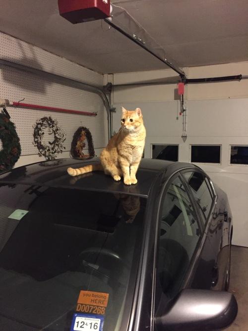 Turbo Scratcher Cat Toy Australia
